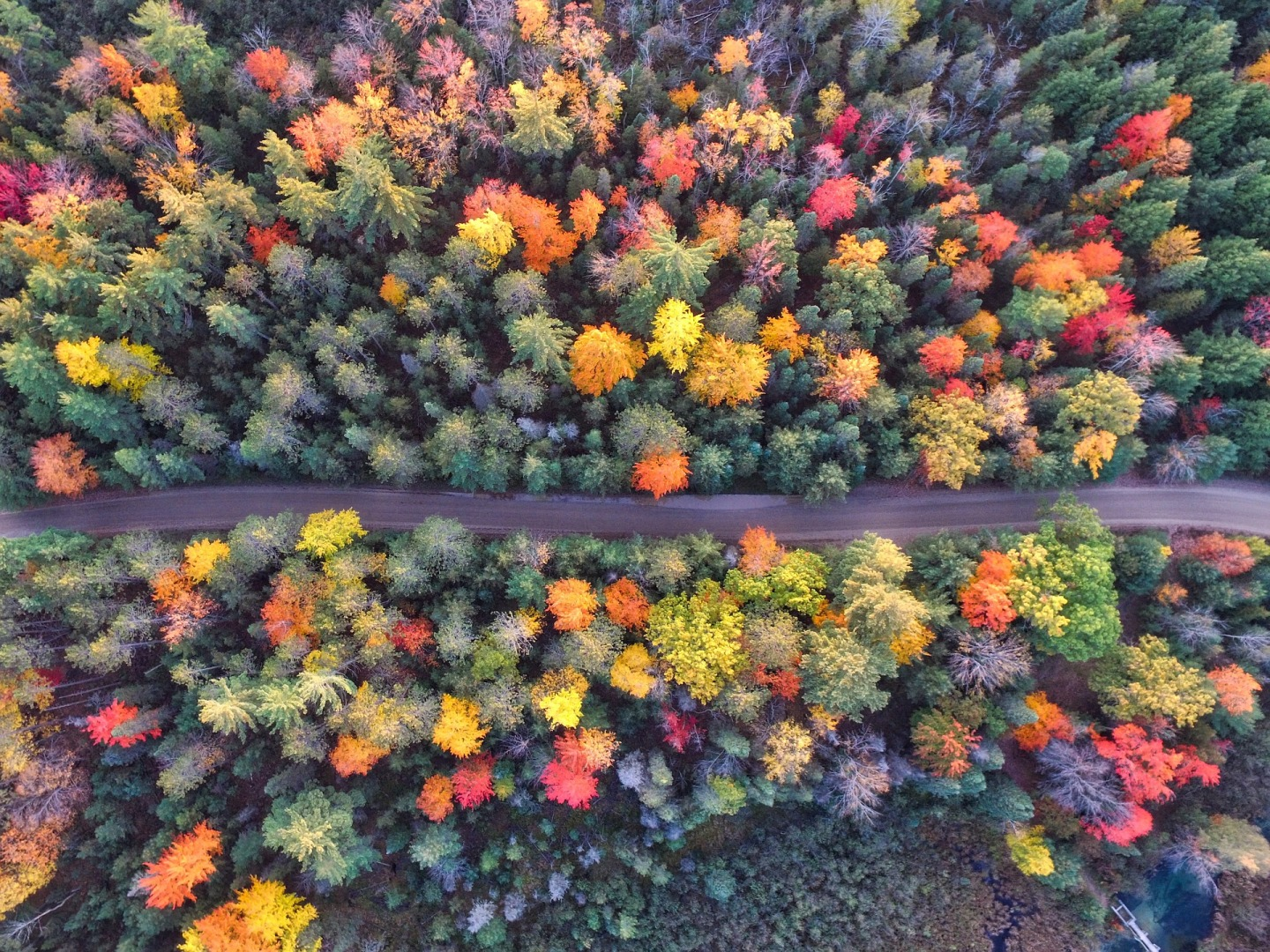 Sky view of a trees in fall with lots of changing colors